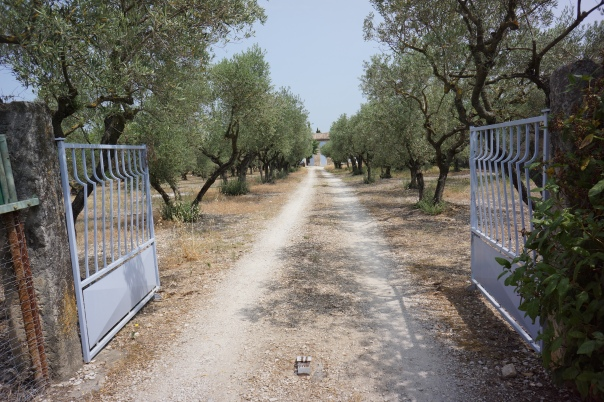 Views of olive tree garden that inspired a famous Van Gough painting in St-Remy-de-Provence